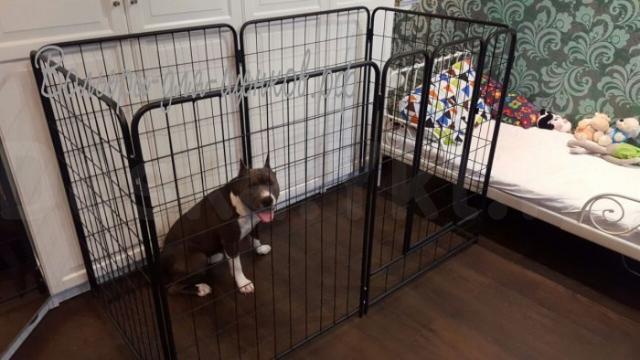 Вольер усиленный для собаки в квартиру